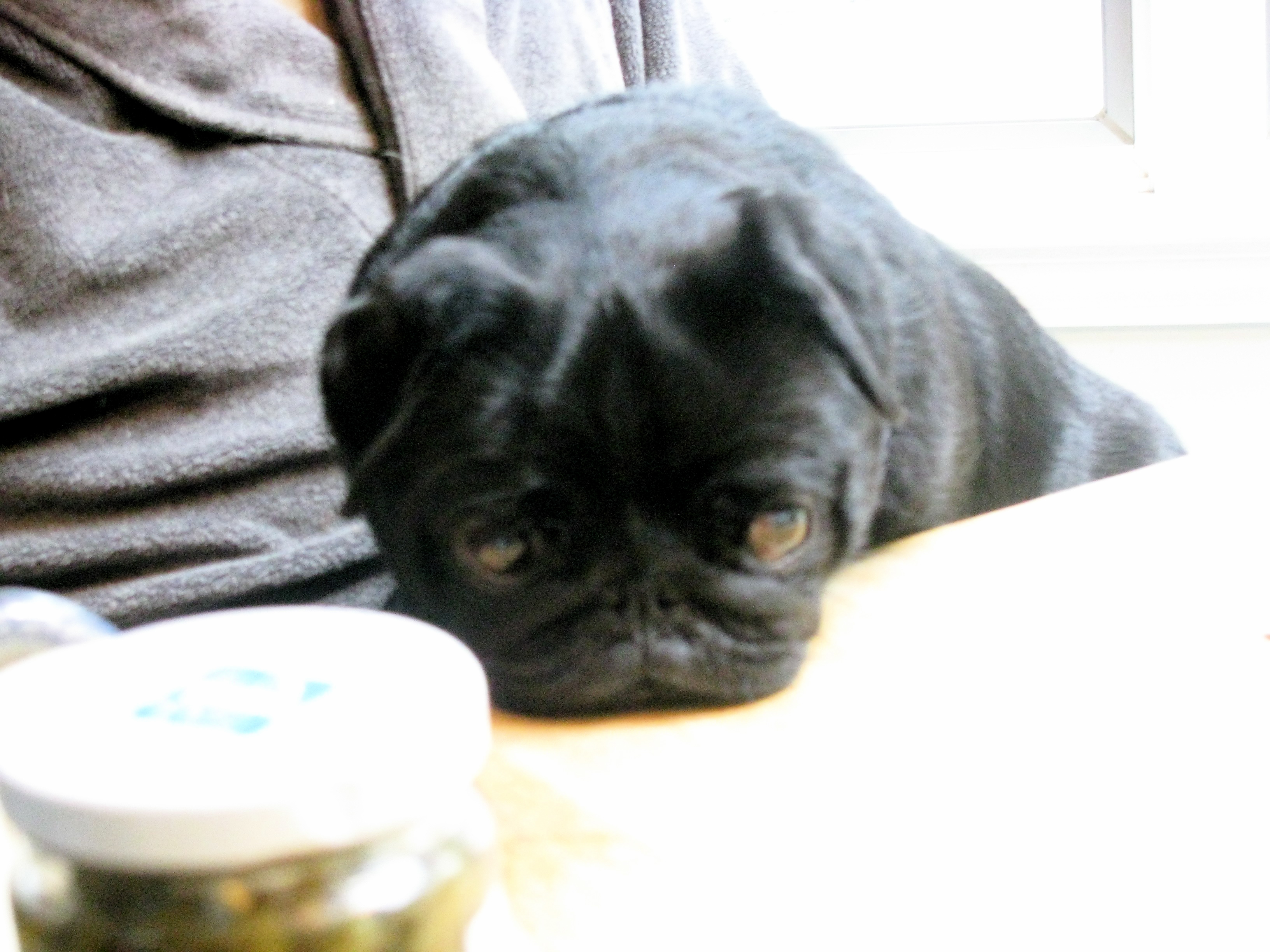 """This is it, folks, the final """"emo"""" shot of Ceci...no more. I've devoted enough time and space to this pug. She will have to have her blog if she wants press time!"""