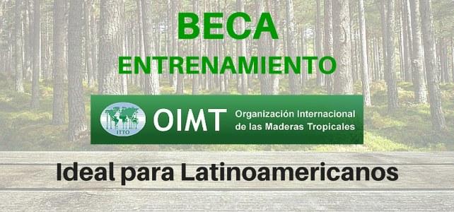 Programa de Becas de la Organización Internacional de Maderas
