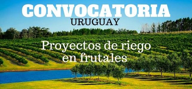 Convocatoria para proyectos de riego en frutales y horticultura en Uruguay
