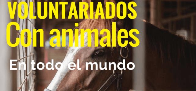 Voluntariado con animales alrededor del mundo – Sin restricciones de nacionalidad