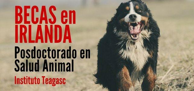 Becas en Irlanda para postdoctorado en salud animal
