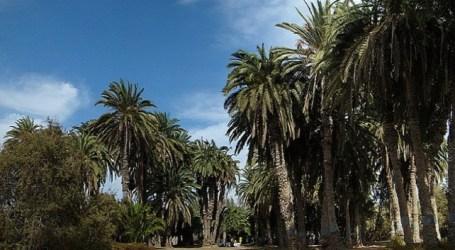 Cabildo y Ayuntamiento reactivarán el parque Tony Gallardo de Maspalomas