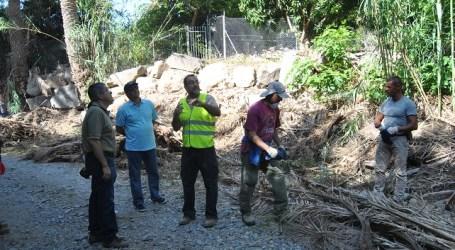 Voluntarios de Foresta limpian el palmeral de Arteara para evitar incendios