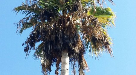 Jardines de playa del Cura: ejemplo lamentable e intolerable de abandono municipal