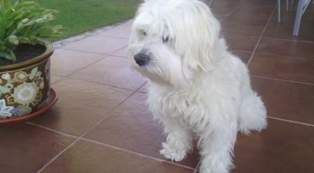 Arranca en Santa Lucía un plan integral sobre tenencia responsable de mascotas