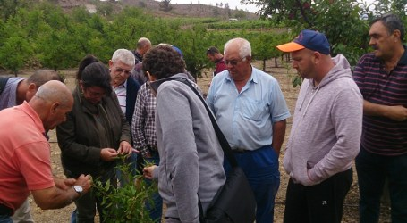 Agricultores de San Bartolomé de Tirajana se ponen al día con el almendro