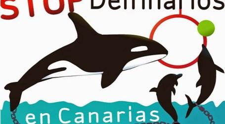 Los ecologistas apuestan por el final de los espectáculos en delfinarios de Canarias