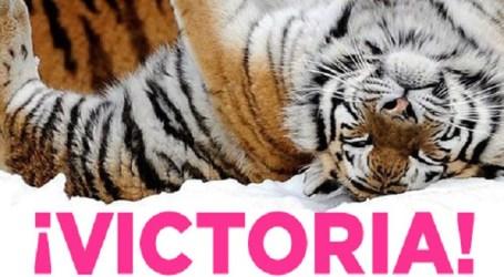 Santa Lucía se suma a la red de ciudades éticas libres de espectáculos con animales
