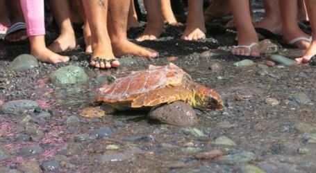 Pozo Izquierdo vive una semana de fiestas que culmina con el Festival por el Medioambiente