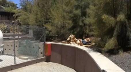 Paco Molina pide una solución para un sin techo enfermo que vive en Meloneras