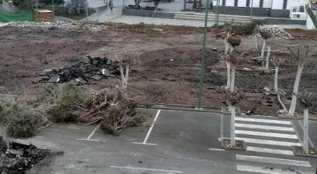 NC denuncia que Ciuca-PSOE continúan arrasando las zonas verdes de Mogán (galería de imágenes)