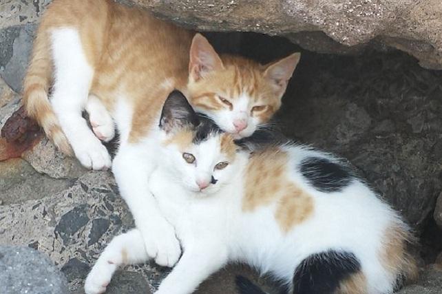 Gatos Garfield y Manchita