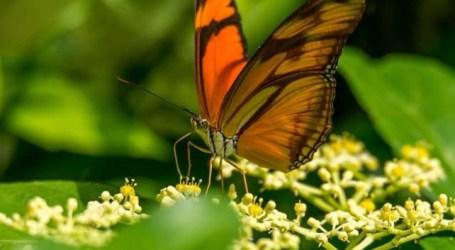 'Biodiversidad: se mire como se mire'