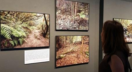 Prorrogada en la Casa de Colón la exposición sobre los paisajes de la laurisilva de Canarias