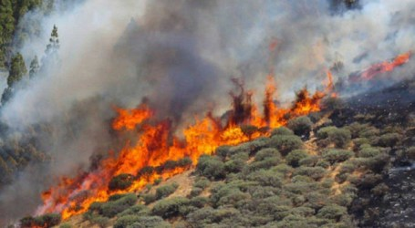 Fuego en Gran Canaria, crónica de una desgracia anunciada