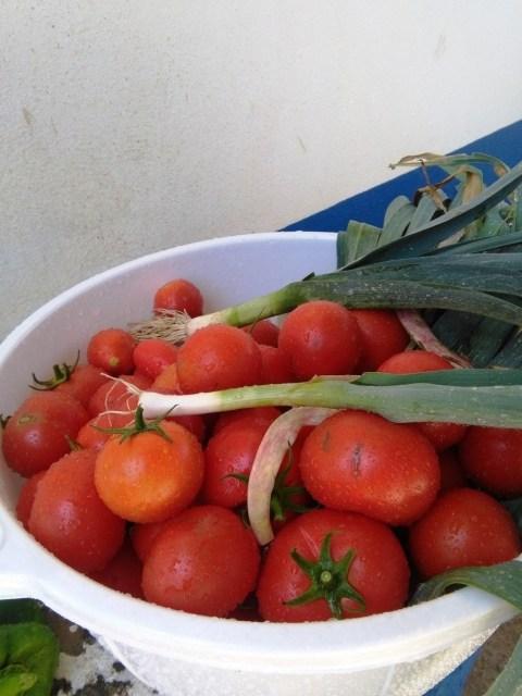Uma das colheitas