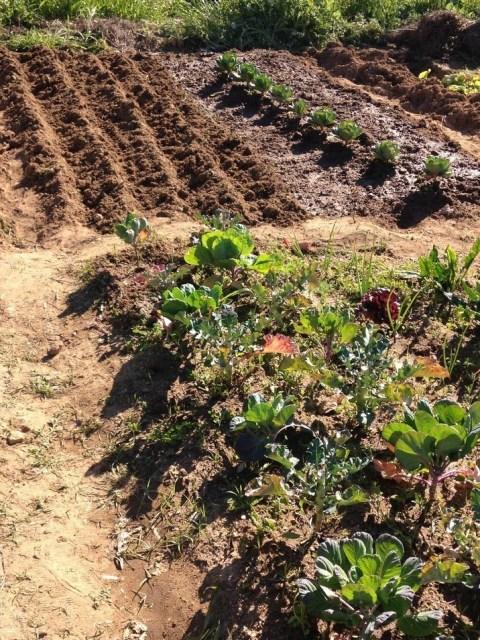 Resultado final depois de lavrar e semear