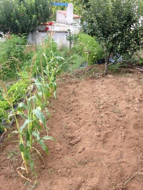 Evolução cultivo #4
