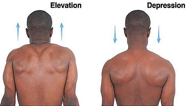 Shoulder+elevation