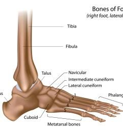 foot bones [ 5001 x 4001 Pixel ]