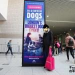 ロンドン最大のドッグショー EUKANUBA DISCOVER DOGSを紹介します!