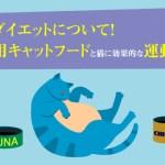 猫のダイエット方法!減量用キャットフードと猫に効果的な運動方法