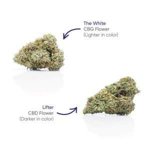CBG+CBD Lifter Flower