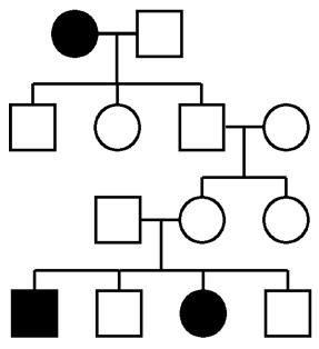 Human-genetics-pedigree-large