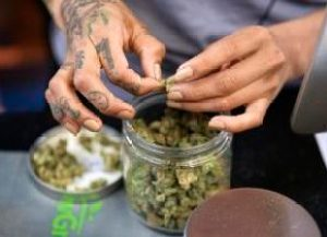 In this April 15, 2017, photo a budtender weighs out marijuana for a customers at ShowGrow, a medical marijuana dispensary in downtown Los Angeles. This year is poised to be a big one for legalized marijuana, with California and other states that recently approved recreational pot coming online. Yet uncertainty over the Trump administration's intents toward pot enforcement has created at least partial paralysis in those states on public consumption, licensing and other issues. (AP Photo/Richard Vogel)