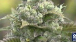 Recreational_marijuana_market_to_open_in_0_41468772_ver1.0_1280_720