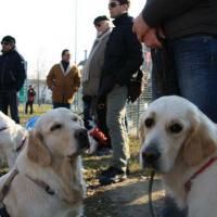 Il Parco dei cani di S.Agostino trasloca nel Parco di via Modigliani