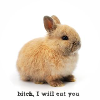 bitch, I will cut you