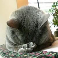 SRSLY? Meow meow meow.