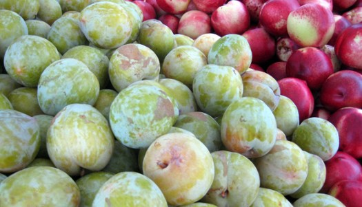These green-yellow plums are my favorites!