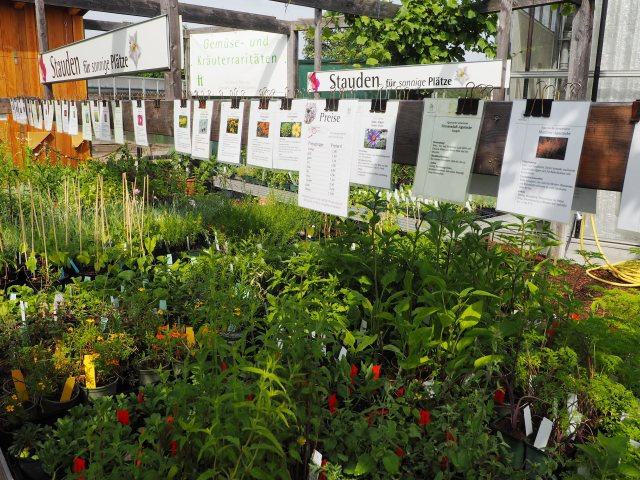 Diese Kräuter und Pflanzen warten auf einen Käufer und ein gutes Platzerl.