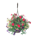 hanging-basket-calypso-wholesale