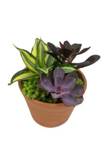 succulent-garden-wholesale-masson-farms-new-mexico