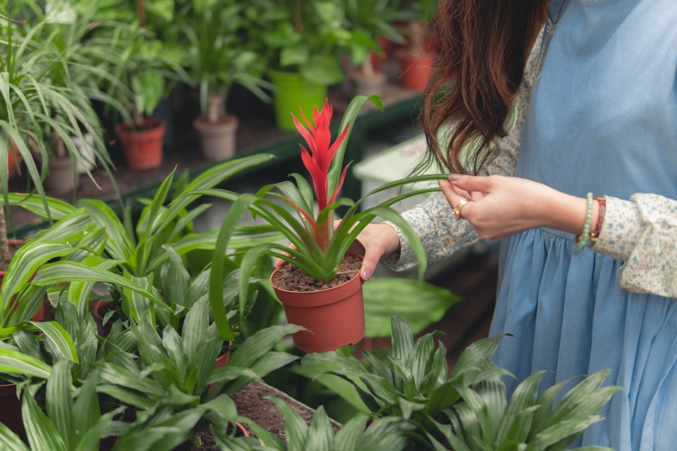 woman carrying green-leafed plant in pot
