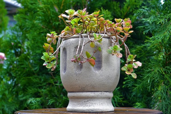 Горшок для цветов Трио 1