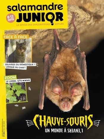 C'est Pas Sorcier Chauve Souris : c'est, sorcier, chauve, souris, Chauve-souris…, C'est, Sorcier, Salamandre