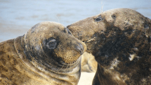 SBI Feedback Model - two seals talking