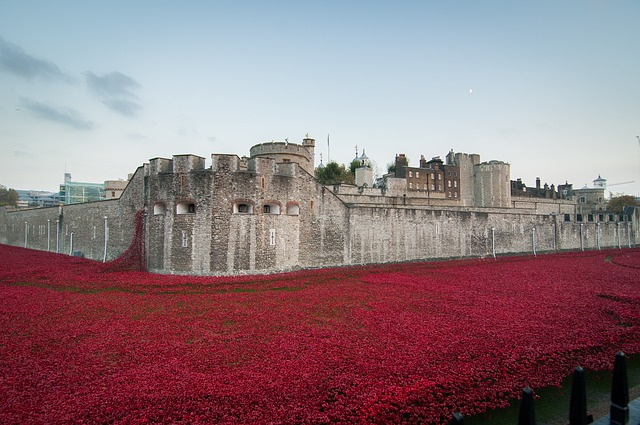 poppies rememberance day | Masterflex UK