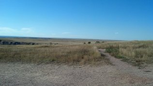 Grasslands in the Badlands