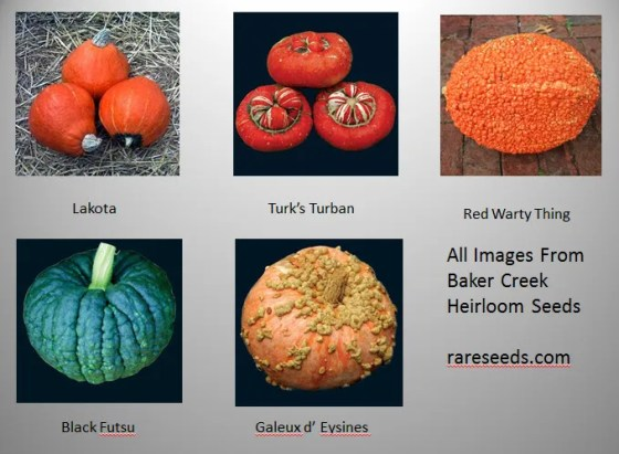 The five varieties of winter squash I am currently growing.