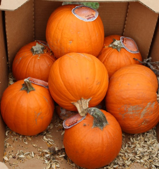 I had no idea how much fun there was in a box of pumpkins