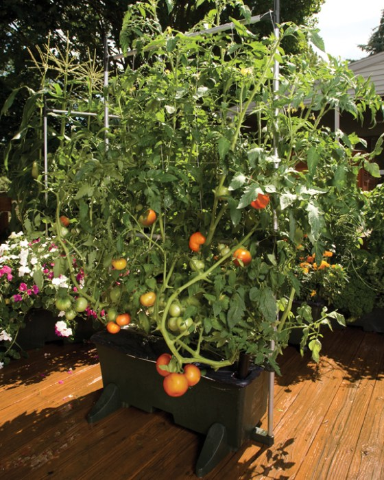 EarthBox allows you to grow big, beautiful tomatoes right outside your door