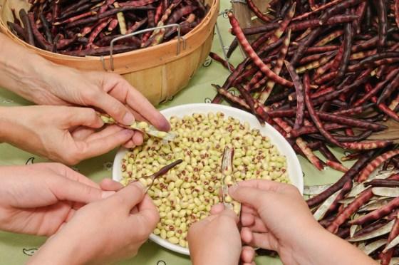 Shelling-Peas