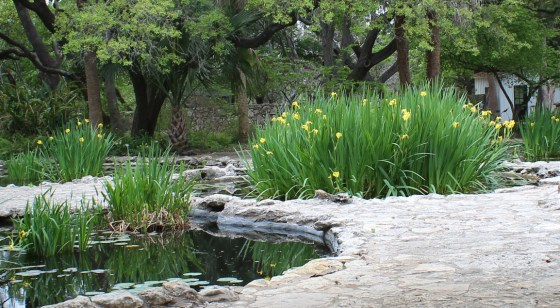 Mayfield Park in Austin is a gardeners and photographers paradise in the heart of the city.
