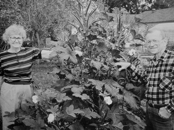 George and Mary Stewart in their Houston vegetable garden in the early 1990s. Photo by William D. Adams