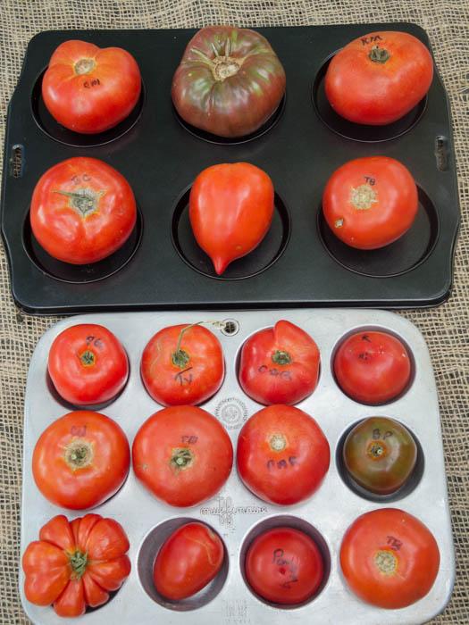 tomato-varieties